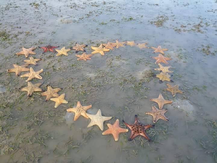 ปลาดาว ที่อ่าวแหลมล้าน เกาะยาวใหญ่